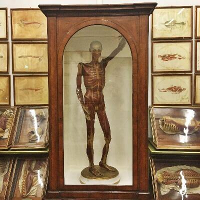 Weird La Specola Florence Italy Skeleton
