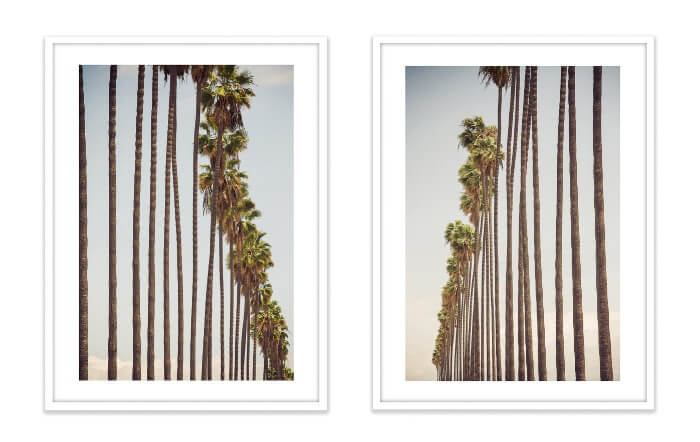 Steve Wrubel Palm Trees Photographs