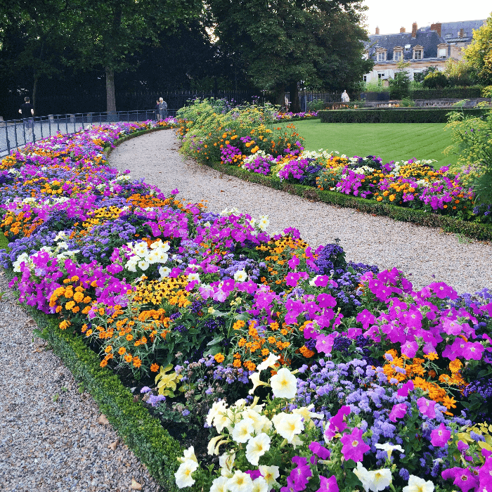 Luxembourg Gardens Flower Bed