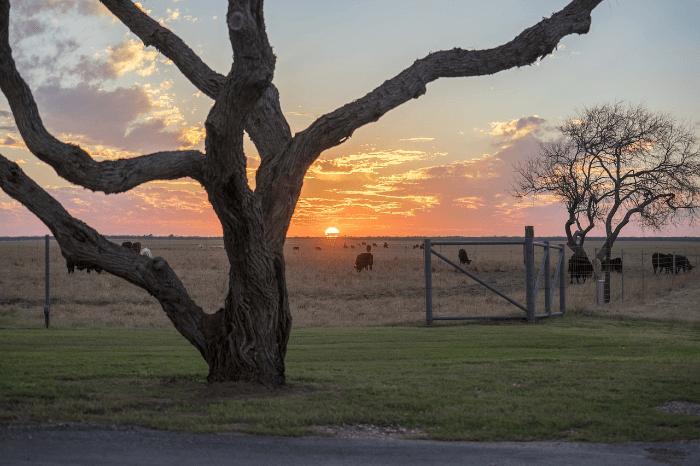 West Texas Festivals sunset